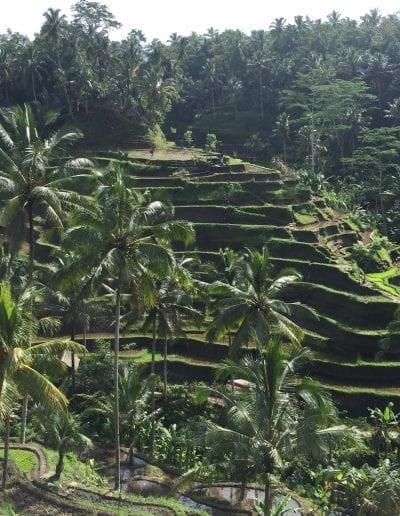Bali option2